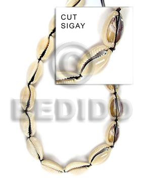 Teens sigay whole shell beads