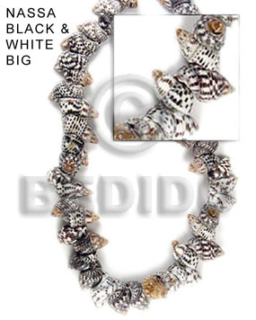 Unisex nassa black and white whole shell beads